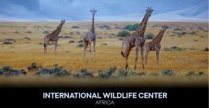 International Wildlife Center
