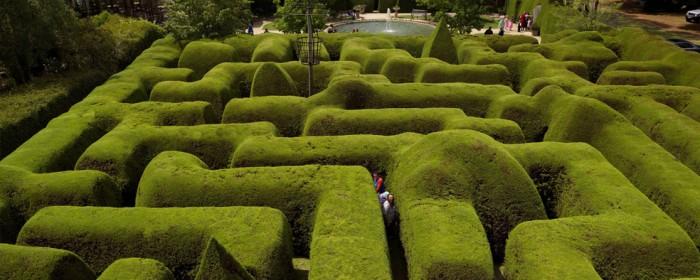 ashcombe-maze01