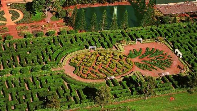 dole_pineapple_maze